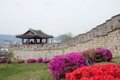 Looking at stretch of Suwon's Fortress wall with bright purple coloured flowers running alongside it