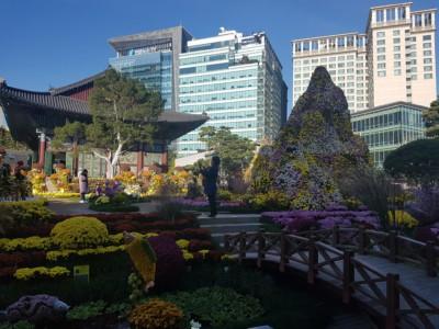 서울 시내에 위치한 조계사. 고층 건물이 배경에서 내려다 보이는 아름다운 색의 꽃으로 장식되었습니다.