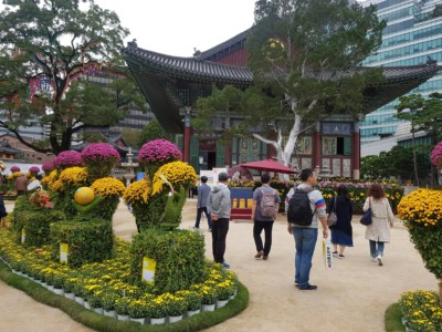 Looking at Jogyesa temple from within its colorful garden