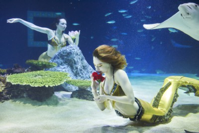 Watching 2 mermaids doing a performance in a tank with fish
