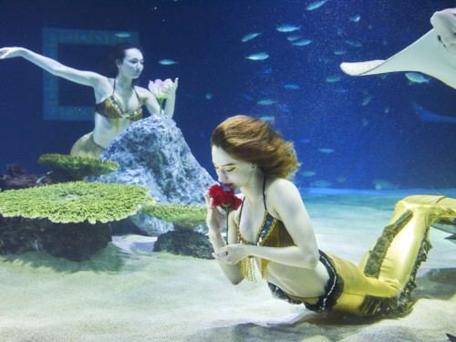 Watching 2 mermaids doing a performance in a tank with fish and sea life at the 63 Building Aquarium