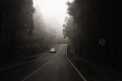 어둡고 안개 낀 날에 신비한 길을 운전하는 자동차