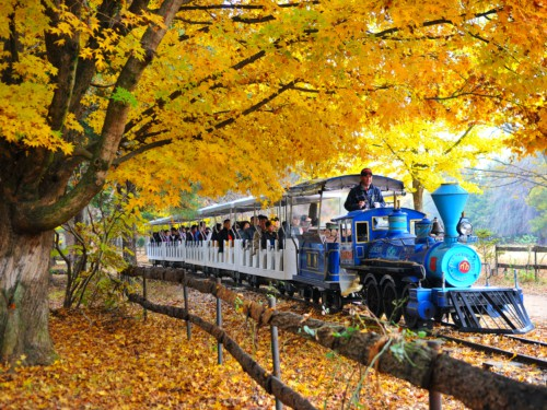 People taking a train ride around Nami Island