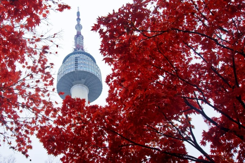 Looking up at the beautiful Namsan Tower through Autumn red colored leaves