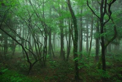 나무를 통해 정점 밝은 녹색으로 안개 낀 날에 조용한 사려니숲길