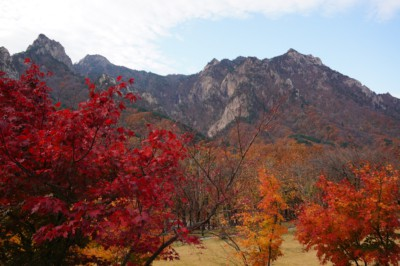 Stunning red, gold and yellow leaves hanging from the trees with mountain scenery seen behind during on of our Seoul to Seoraksan day trips during the Autumn season