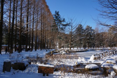 Nami Island's Space Garden with a frozen over pond in the middle
