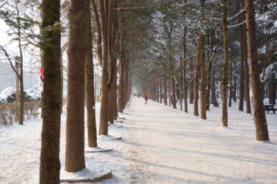 Trees and paths covered in a blanket of white snow at Nami Island