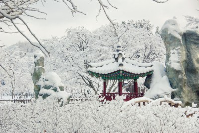 Nami Island in Korea covered in snow during Winter