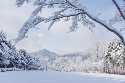 Gorgeous winter view of Nami Island covered in heavy powdered snow