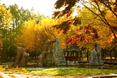 Incredible green, red, yellow and golden brown colors can be seen on the trees which are in Autumn on Nami Island